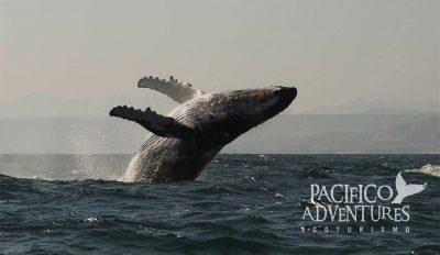 Pacifico Adventures 2017