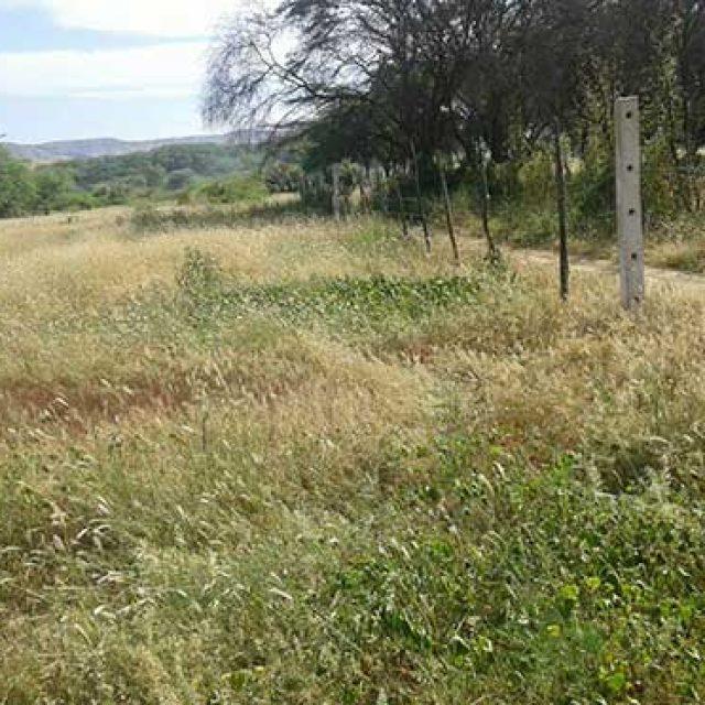 Se venden lindos terrenos campestres a 10 minutos de Máncora y  terreno en 1era fila entre Máncora y Punta Sal