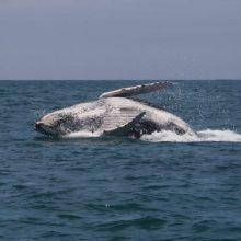 Avistamiento de Ballenas con Las Cherelas Adventure & Fishing Club