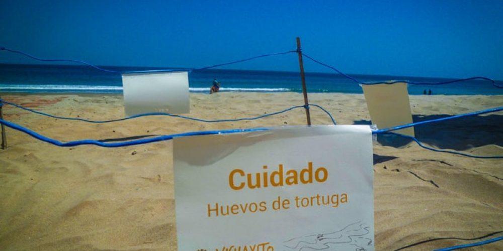 Tortugas Marinas en Vichayito Bungalows & Carpas de Aranwa