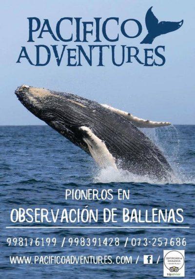 Temporada 2018 Avistamiento de Ballenas