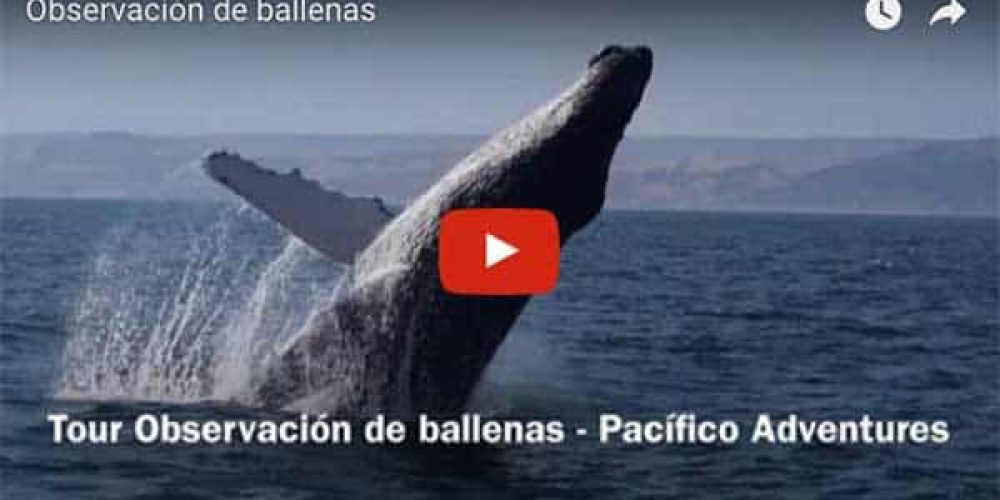 Pacifico Adventures release a new Whale Watching Video Tour