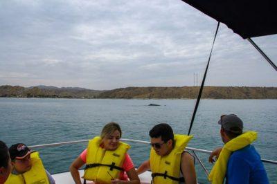 Tour Ballenas en Las Cherelas