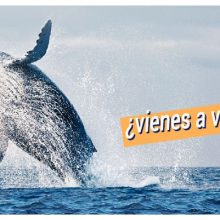 """Ballenas a la Vista!, la nueva """"promo"""" de Vichayito Bungalows & Carpas"""