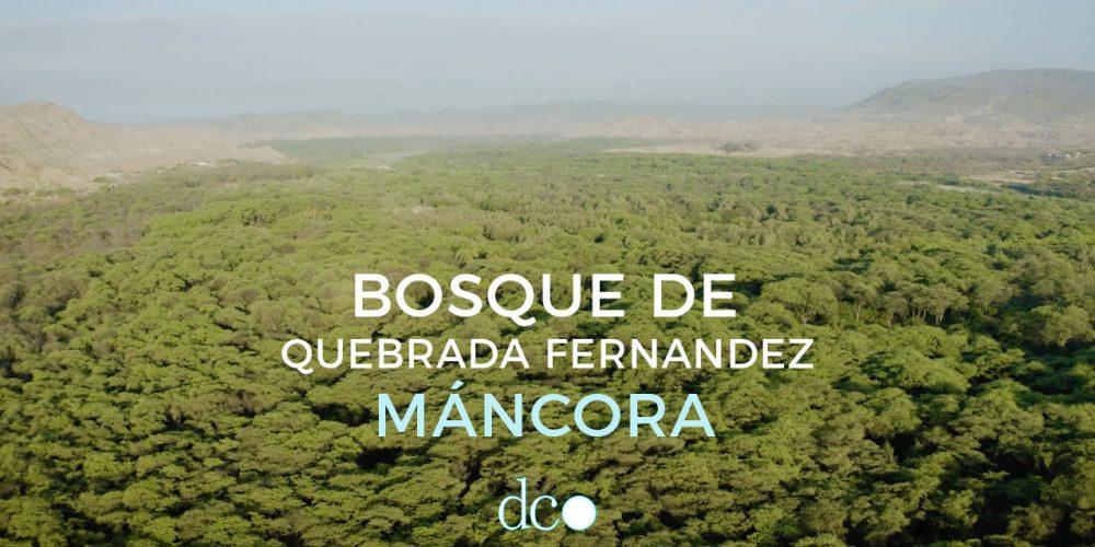 El Bosque de Máncora que hoy descansa de nosotros