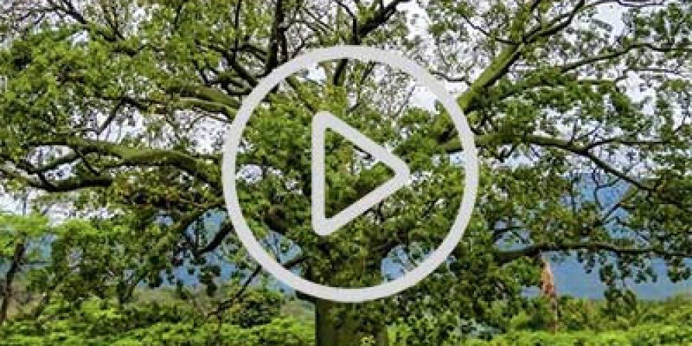 Video: Cienego Sur at Parque Cerros de Amotape