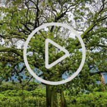 Video: Ciénego Sur, Parque Nac. Cerros de Amotape