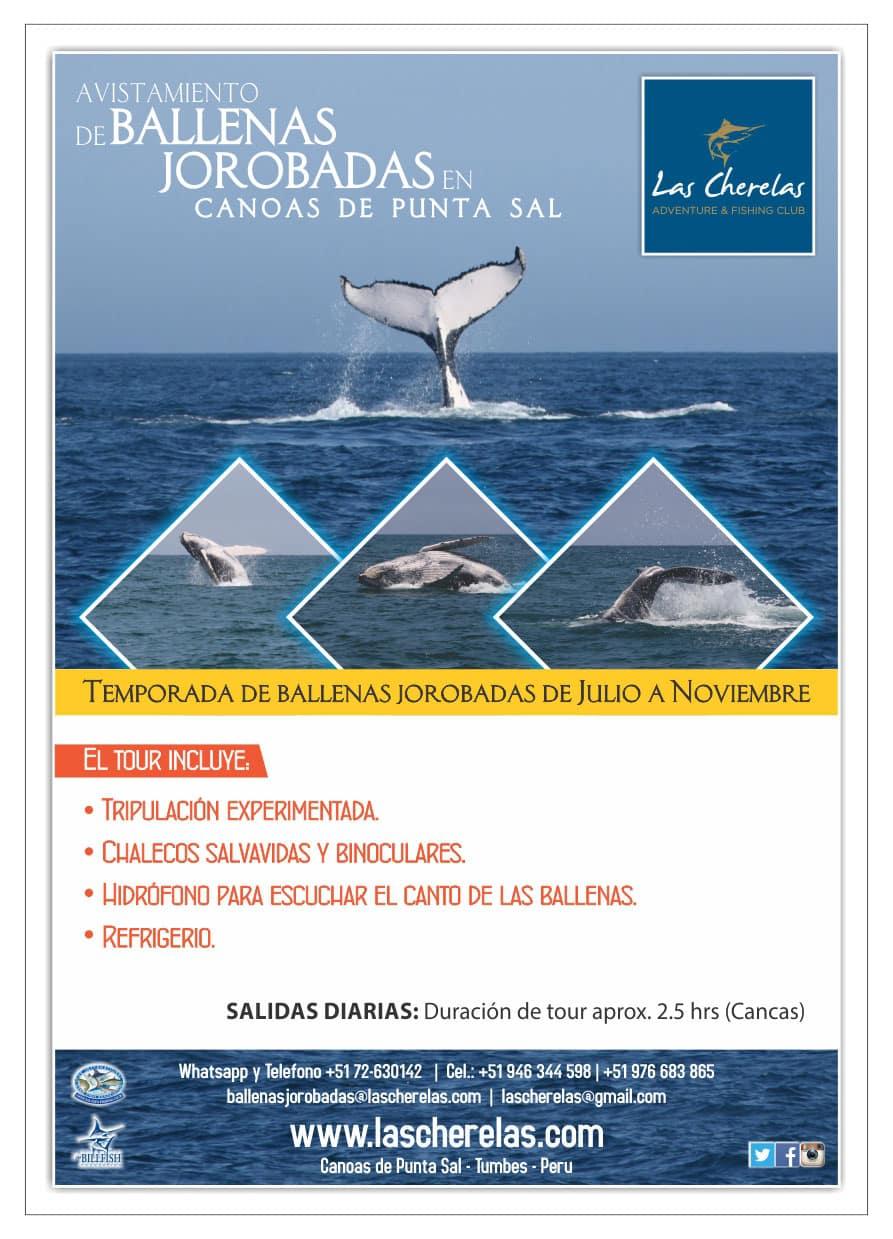 cherelas-ballenas-1