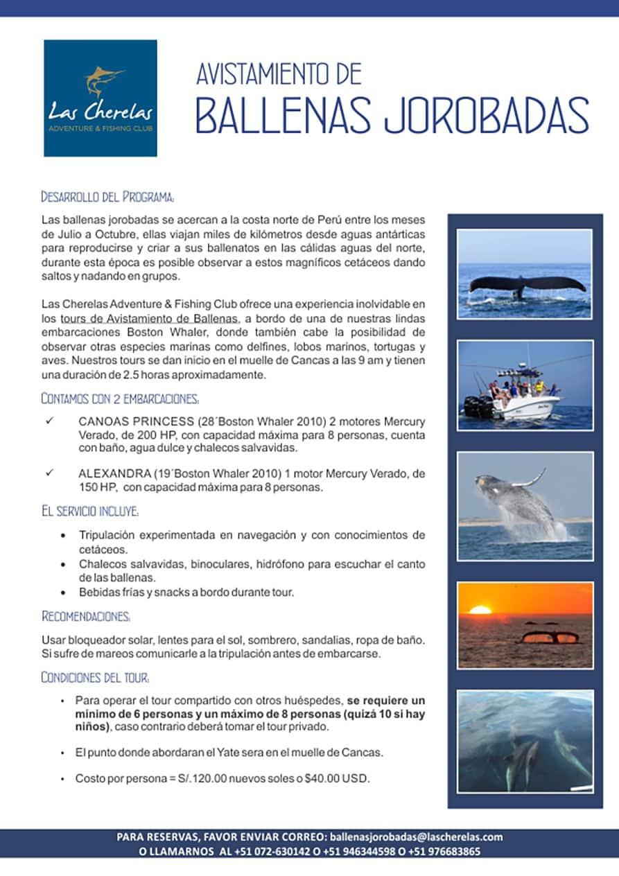 cherelas-ballenas-2