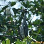manglares-tumbes-4