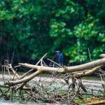 manglares-tumbes-7